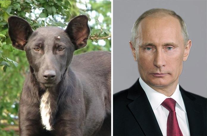 celebrity look alikes animals